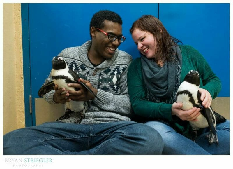 engagement photos with two penguins