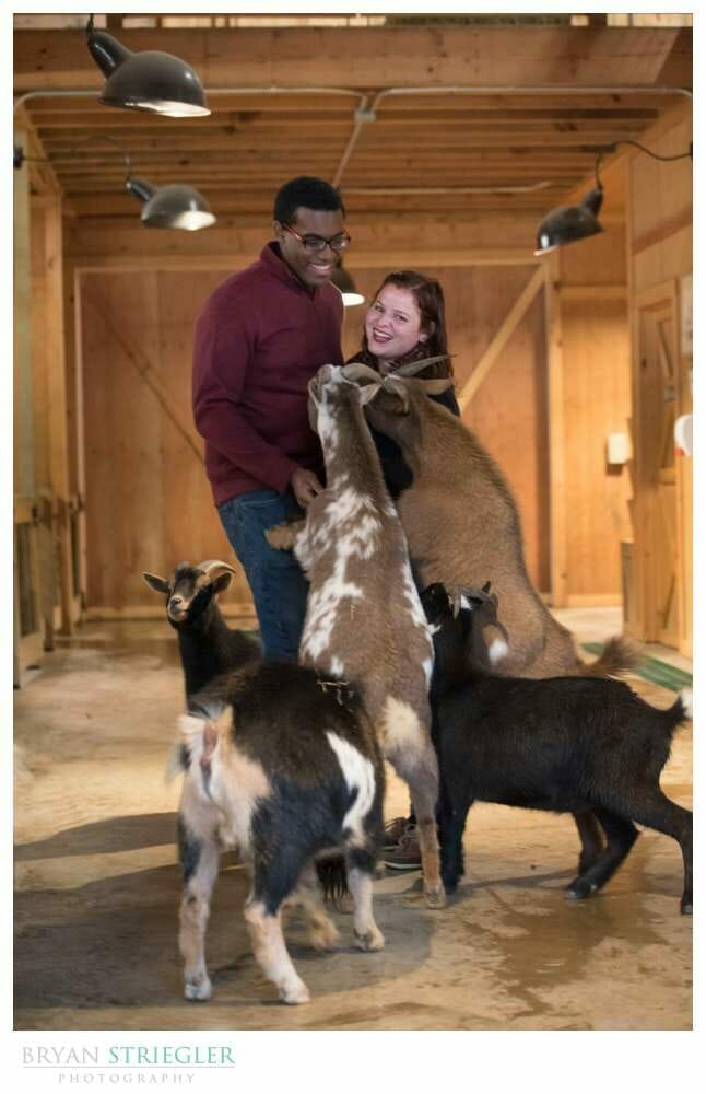 engagement photos with goats at the Little Rock Zoo