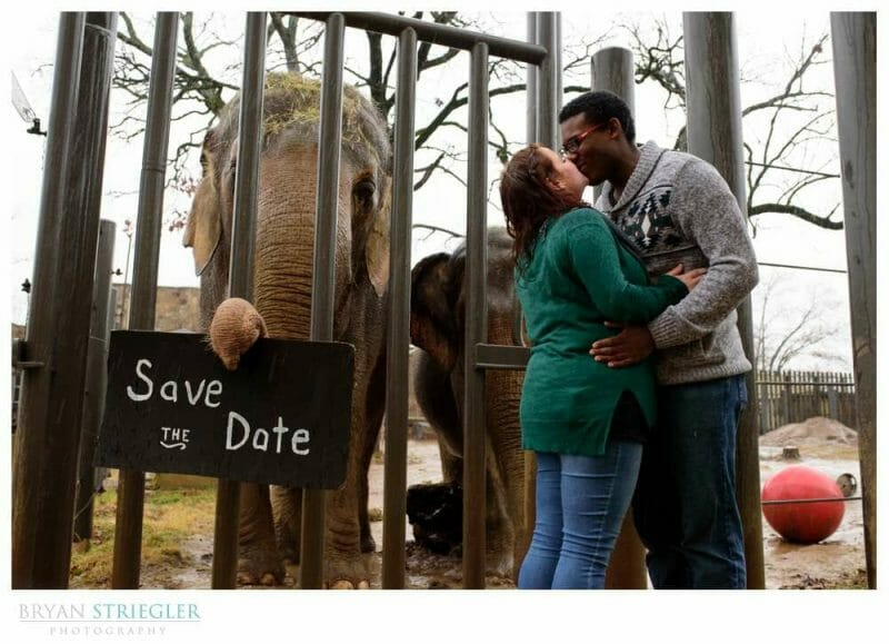Save the Date photo with elephant at the Little Rock Zoo