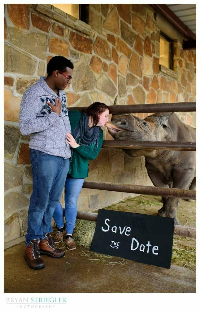 Save the Date photo with a rhino