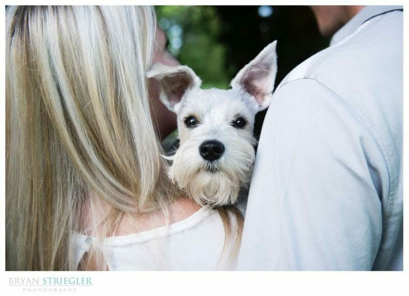 dog at an engagement session
