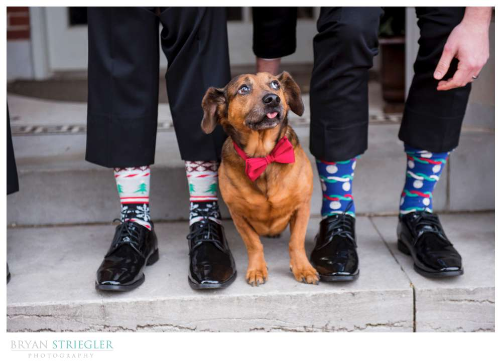dog with bowtie at wedding
