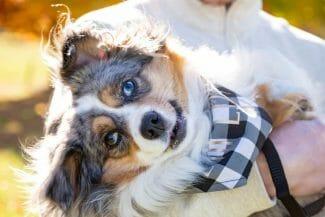 close up of dog photo