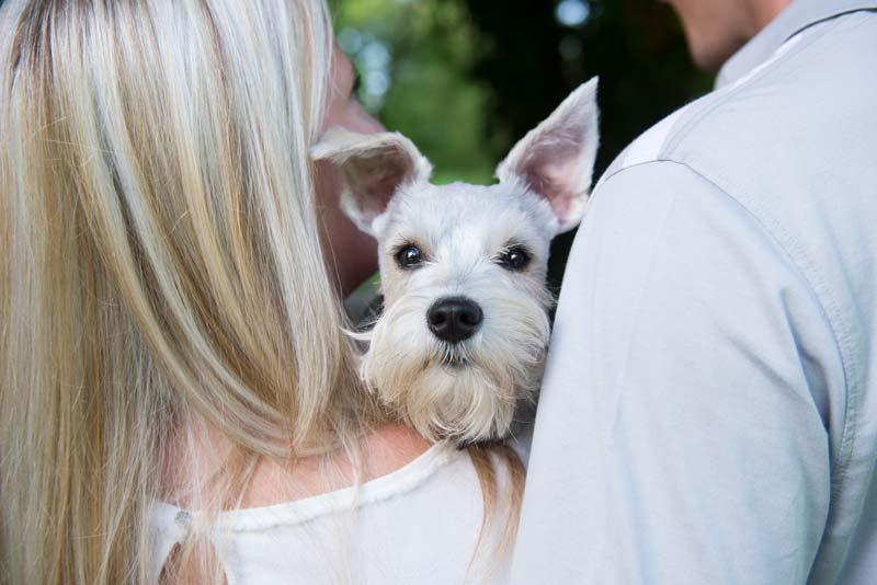 couple holding dog during engagement photos